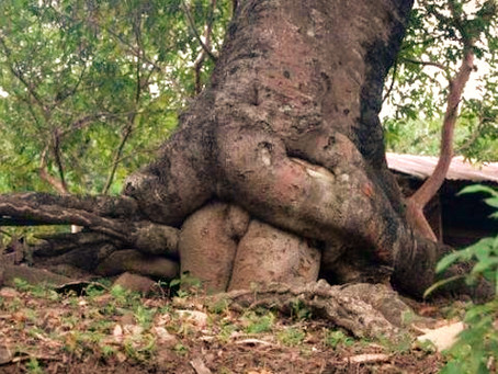 Warum Bäume? Seid ihr so Ökos?