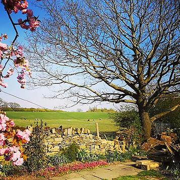 Garden with Cherry Tree