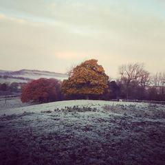 Winter Wortley