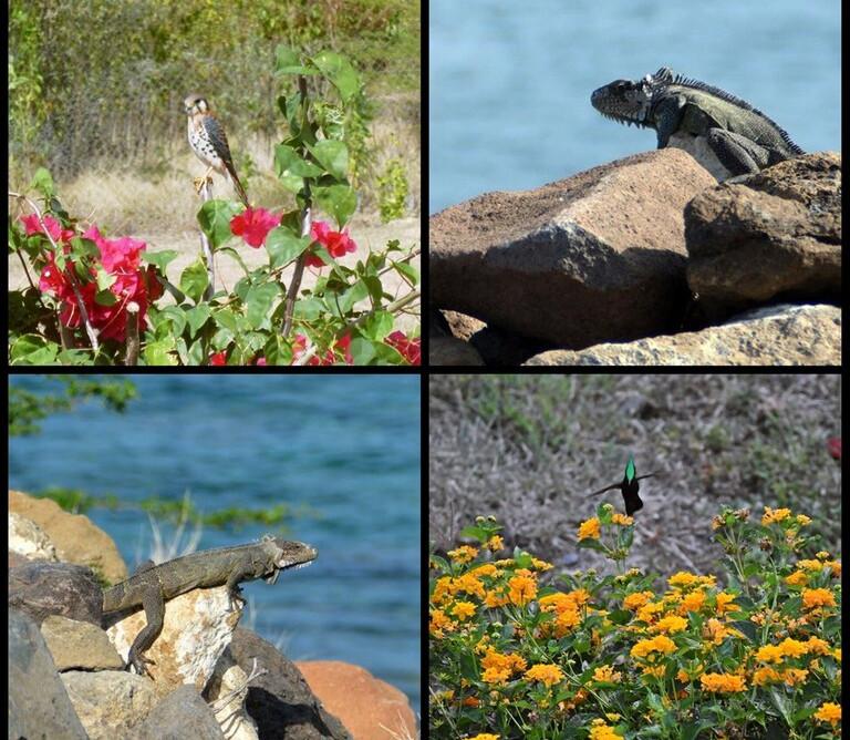 Flore et faune devant les Blue Haven villas