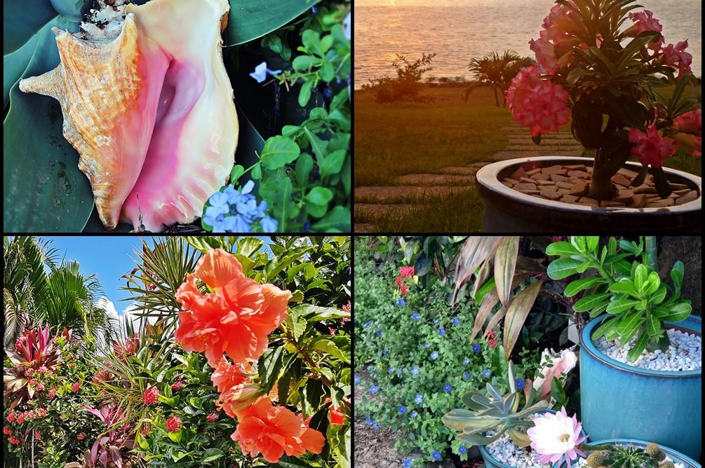 Quelques fleurs à Blue Haven Villas