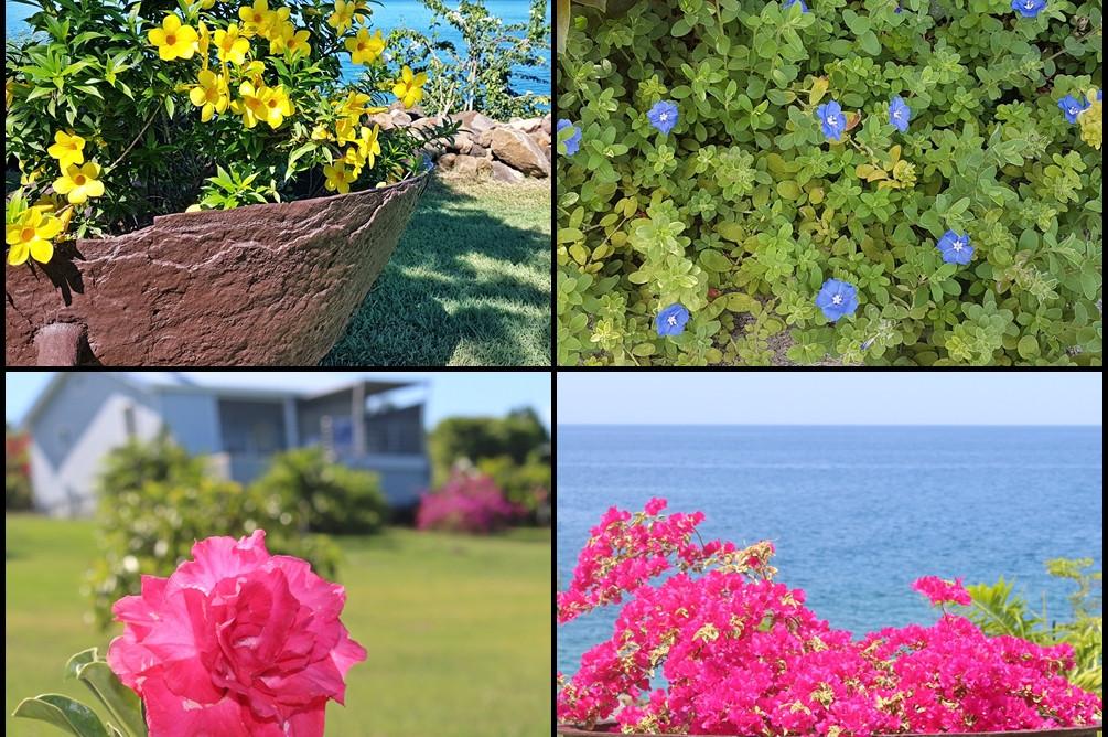 Quelques fleurs de Blue Haven