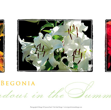 Lilies and Begonia Triptych