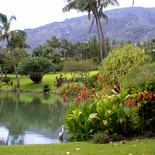 Maui Plantation