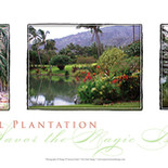 Maui Tropical Plantation Triptych
