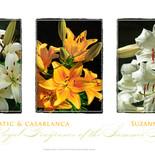 Lilies Triptych