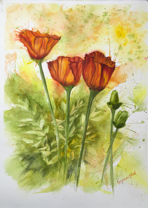 Passion for Poppies