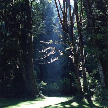 Window in the Woods