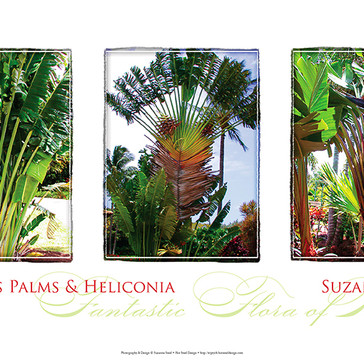 Traveler's Palms Triptych