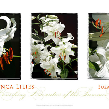 Casablanca Lilies Triptych