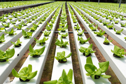 Hydroponic Growing