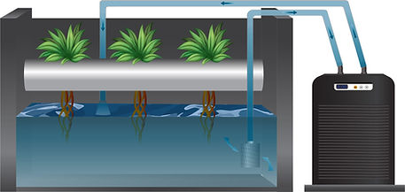 HC Series chiller being used for hydroponics