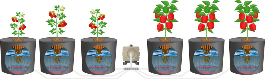 AC45 Air pump used for multiple single pot hydroponics