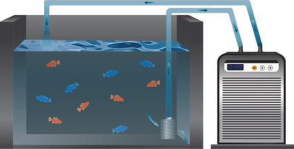 HS Series Chiller being used for aquariums