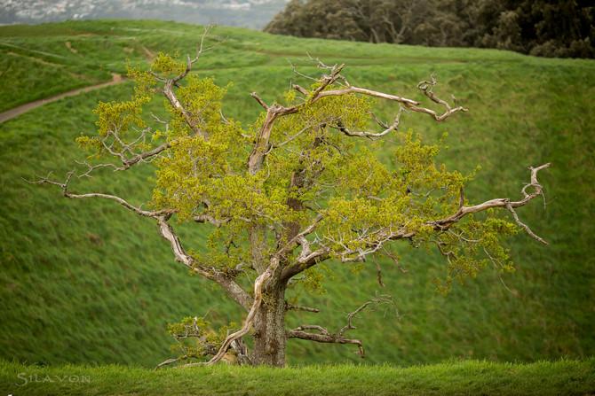 Auckland und die Besteigung des Mt. Eden