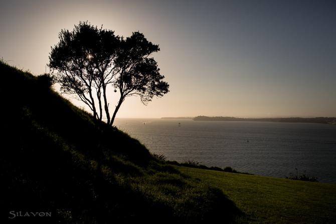 Auckland's botanische Seite