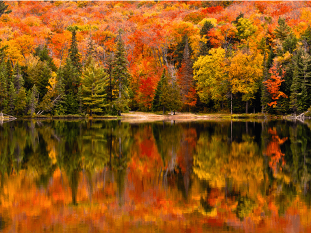 8 Breathtaking Spots to View the Fall Colors in Ontario