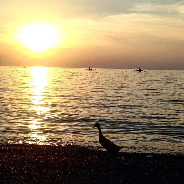 Watching the sunset, with the ducks, in Lovina