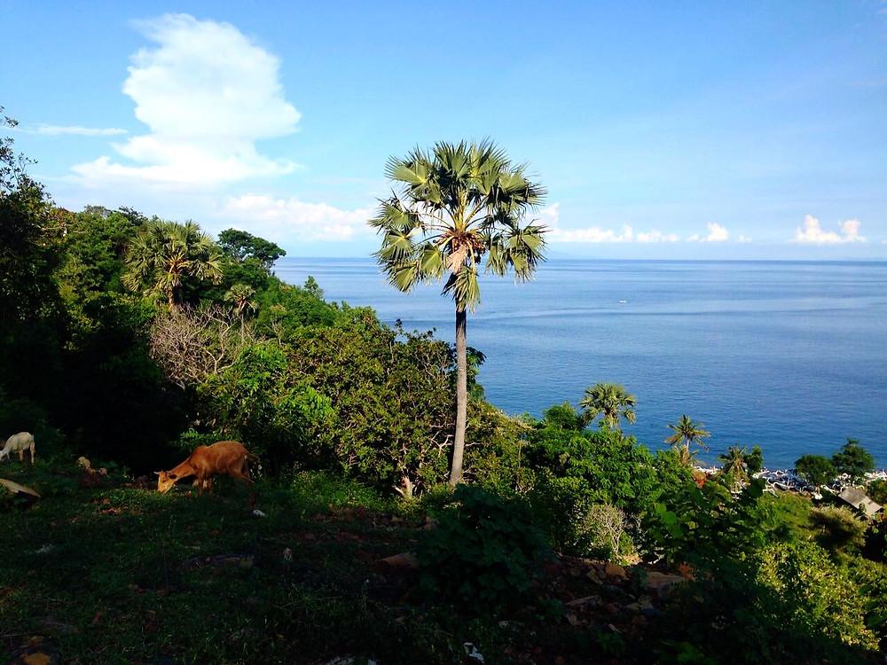 Exploring the Amed coastline