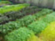 Fazenda Urbana 678x520.jpg