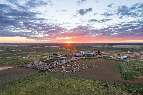 'Sunrise over the Woolshed Yards'