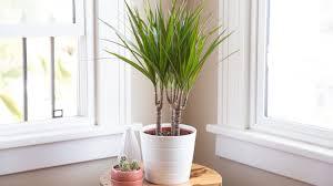 🎍 Las 10 mejores plantas para interiores.