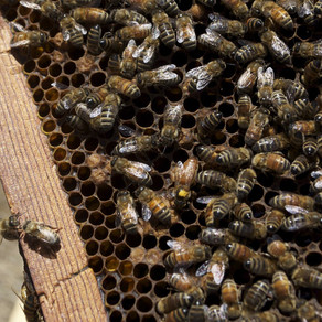 Four Ways to Get Your Kids Interested in Protecting the Bees