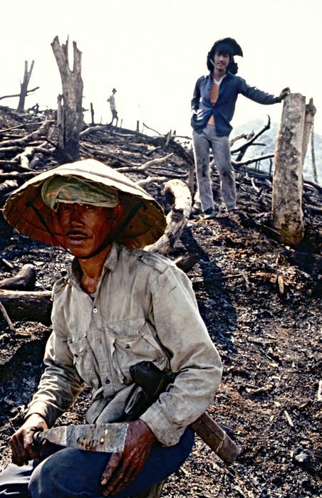 Deforesting workers