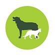 dogwalker logo_edited_edited.png