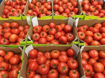 Tomato-500-x-375.jpg