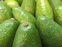Avocado-500-x-375.jpg