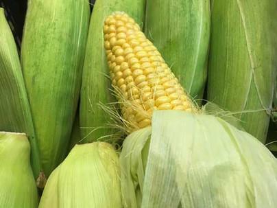 Corn-500-x-375.jpg