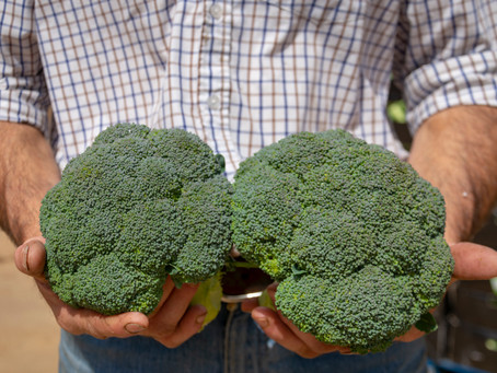 The Health Benefits of Broccoli (Calabrese)