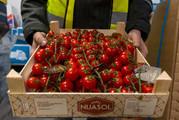 Cherry-Vine-Tomatoes-500-x-337.jpg