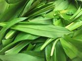 Wild-Garlic-500-x-375.jpg