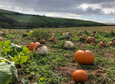 Pumpkin Patch at Terawhiti Farm