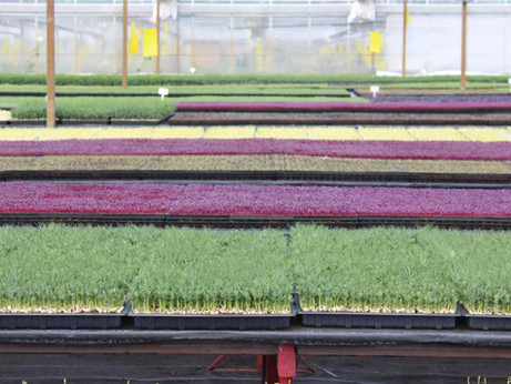 Our Growers | Nurtured in Norfolk