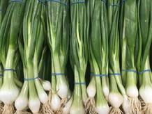 Spring-Onion--500-x-375.jpg