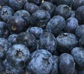 blueberry-500-x-441.jpg