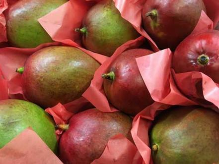 Mango-500-x-375.jpg