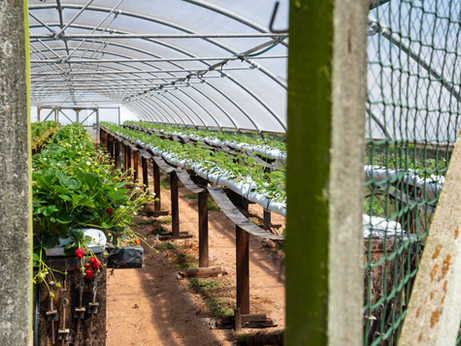 Our Growers | Terawhiti Farm