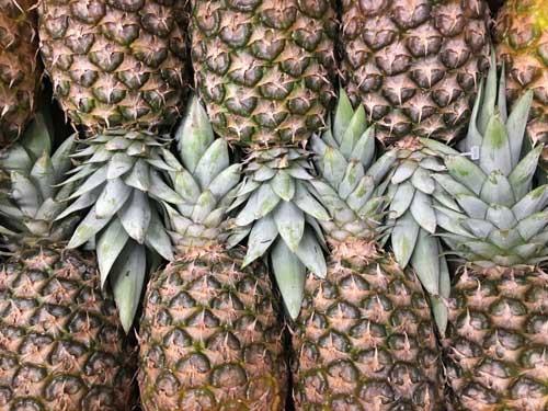 Pineapple-500-x-375.jpg