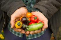 Tomatoes-500-x-333.jpg