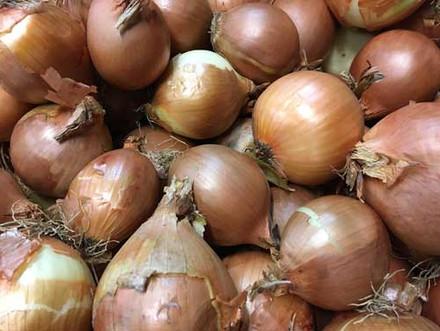 Large-White-Onions-500-x-375.jpg