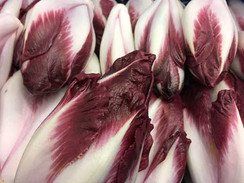 Red-Chicory-500-x-375.jpg