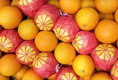 Large-Oranges-500-x-342.jpg