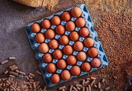 Eggs-500-x-343.jpg