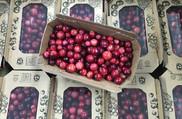 Cranberry-500-x-327.jpg