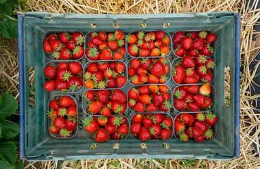 Mitchell-Fruit-Garden-500-x-325.jpg