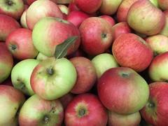 apple-2-500-x-375.jpg